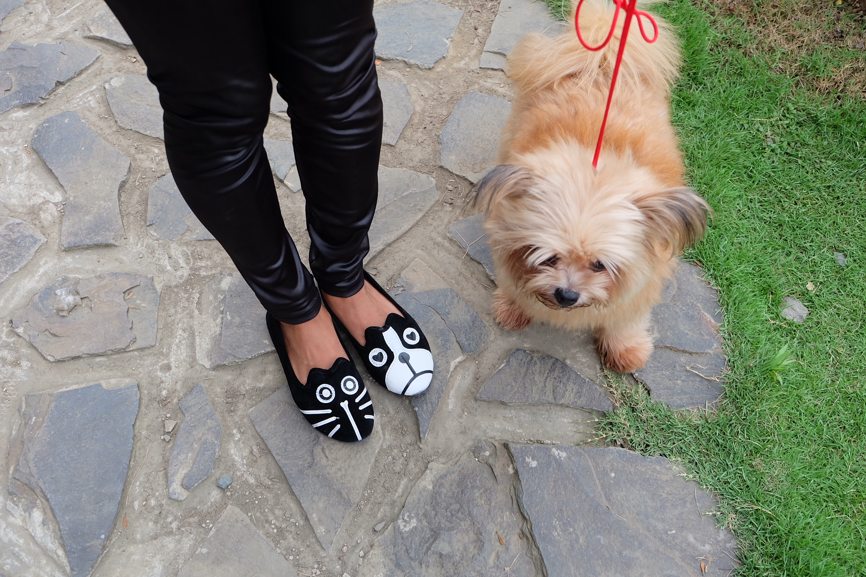 Cats & Dogs feat. SAPATOS.ph